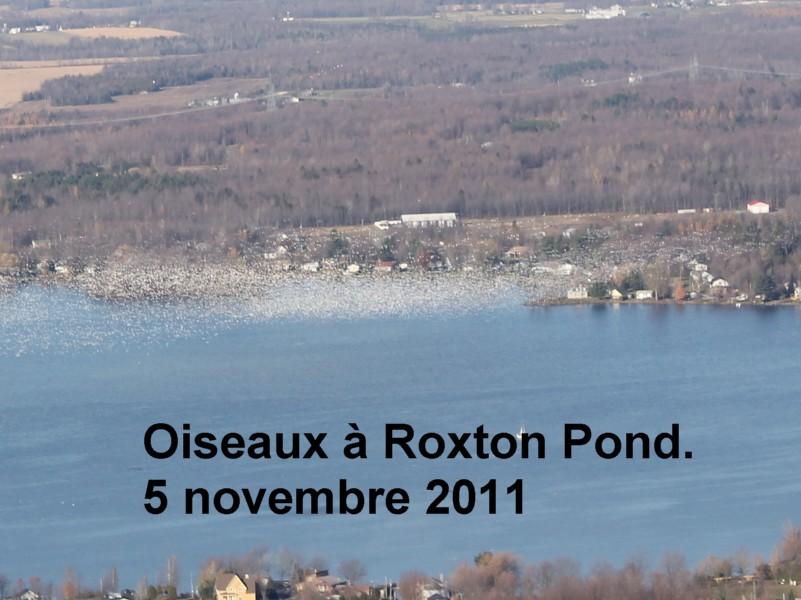 Oiseaux à Roxton Pond